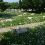 Dugonics temető 1